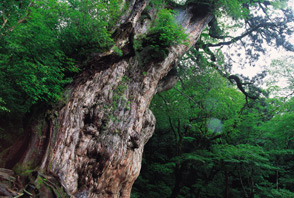 kagoshima yakushima tourism visitor information guide hotel new nishino